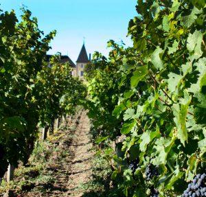 Le vignoble du Château Peyrabon