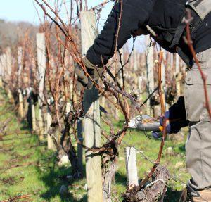 Les travaux à la vigne